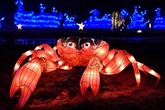 Crabes et crevettes lumineuses au Jardin des plantes pour Noël