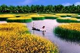 Solutions pour réduire l'affaissement des terres dans le delta du Mékong