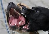 Femme tuée par des chiens dans l'Aisne : ce que l'on sait