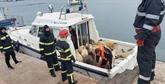 Roumanie : un cargo chavire, inquiétude pour 14.600 moutons à bord