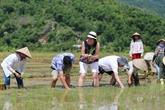 L'éco-hébergement pour un tourisme plus responsable au Vietnam