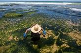 Marée noire au Brésil :