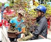 La fête de bonsaï et de suiseki d'Asie-Pacifique aura lieu pour la première fois au Vietnam