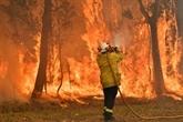 Canicule et incendies : l'état d'urgence décrété dans le Sud-Est de l'Australie