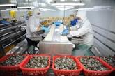 Les centres d'exportation de crevettes du Vietnam s'affirment