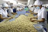 Le Vietnam vise 4 milliards d'USD d'exportation de noix de cajou