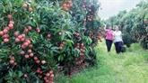 Voyage dans les vergers à Bac Giang