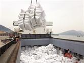 Dynamiser le riz vietnamien à l'international : la qualité avant tout