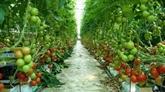 Vietnam - Japon : accélérer la coopération commerciale dans le secteur agricole