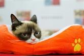 Parfois engagés, toujours lucratifs : les animaux mascottes d'internet