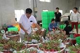 L'excédent commercial agricole s'élève à 8,8 milliards d'USD