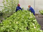 Les entreprises japonaises sondent le marché agricole vietnamien