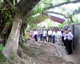 Six arbres précieux reconnus comme patrimoine national