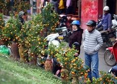 CNN: le marché aux fleurs de Quang Ba, une destination à ne pas manquer à loccasion du Têt