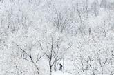 Russie: chutes de neige record à Moscou