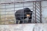 521 animaux en danger sauvés au Vietnam en 2018