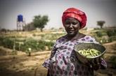 La faim en Afrique poursuit sa progression, selon l'ONU