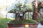 Le bonsaï: la nature en miniature