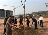 Lancement du mouvement de plantation d'arbres 2019 à Son La
