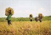 Le Premier ministre travaille avec des ministères pour l'accélération de l'achat de riz