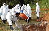 Le virus de peste porcine africaine découvert à Hung Yên et Thai Binh