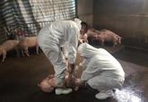 Le chef du gouvernement demande de contrôler en urgence la peste porcine africaine
