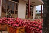 Le Vietnam visent 4,2 milliards d'USD pour les exportations en 2019