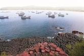 Têt: les vacanciers remplissent les plages de la province centrale de Phu Yên