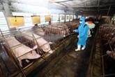 Création du Comité national de pilotage de lutte contre la peste porcine africaine