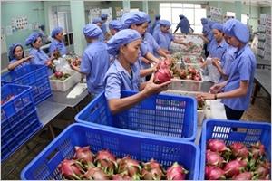 Les Philippines un marché prometteur pour les produits agricoles vietnamiens