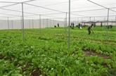 Hanoï enregistre une croissance du GRDP de 6,99% au premier trimestre