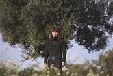 Dans l'Espagne dépeuplée, un village ressuscite grâce à ses oliviers