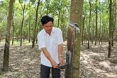 VRG exploite plus de 25.400 tonnes de latex à Kampong Thom en 2018