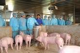Renforcement des mesures face à la peste porcine africaine