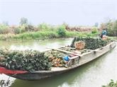 Agriculture: coopération entre producteurs et transformateurs
