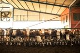 Hausse de l'Indice FAO des prix des produits alimentaires