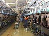 TH possèdera 137.000 vaches laitières d'ici fin 2020