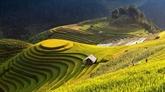 Mù Cang Chai parmi les destinations les plus colorées au monde