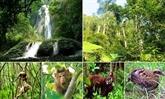 Le WWF aide la conservation de la biodiversité forestière à Thua Thiên-Huê