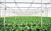 Agro-industrie: la collaboration Vietnam - Pays-Bas renouvelée et renforcée
