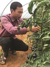 Légumes bio: belle pousse à Quang Binh