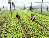 Le gouvernement souligne la restructuration agricole et le contrôle des épizooties