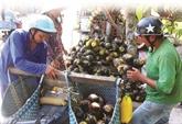 À Bay Nui, le sucre de palme remporte la palme