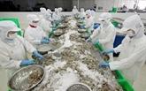 La décision préliminaire américaine est bonne pour la crevette