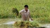 Le Cambodge saisira un tribunal européen contre les tarifs de l'UE sur le riz