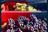 La Vallée du Rhône veut mettre du blanc dans son vin