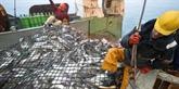 La pêche électrique sera interdite en Europe à partir de la mi-2021