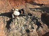 Découverte d'un cimetière de dinosaures datant de 220 millions d'années