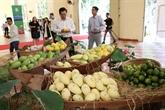 Exportation de mangues fraîches aux États-Unis