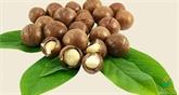 Lâm Dông exporte des noix de macadamia en République de Corée et à Singapour